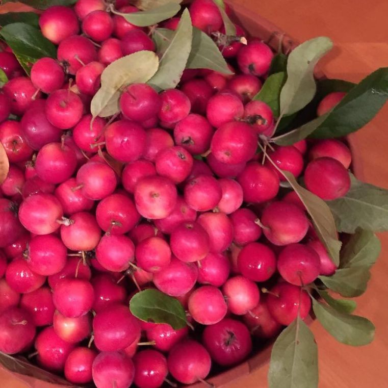 ludlow_hygge_at_this_time_of_year_a_long_family_walk___a_bowl_of_handpicked_fruit_ready_for_jam_making__foodieheaven__autumn__crabapple__happy-_view_simple__hygge_in_our_latest_blog_post
